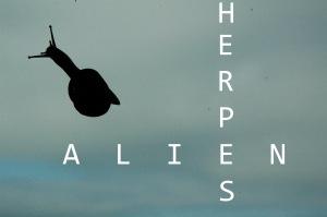 IMG_Alien